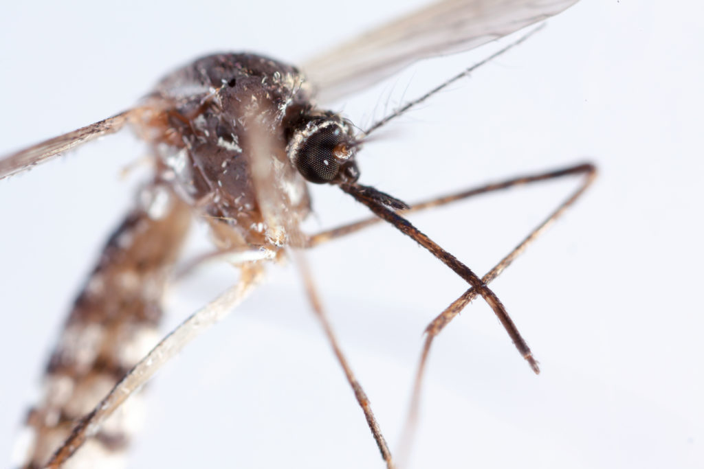 mosquito control services in Burgess
